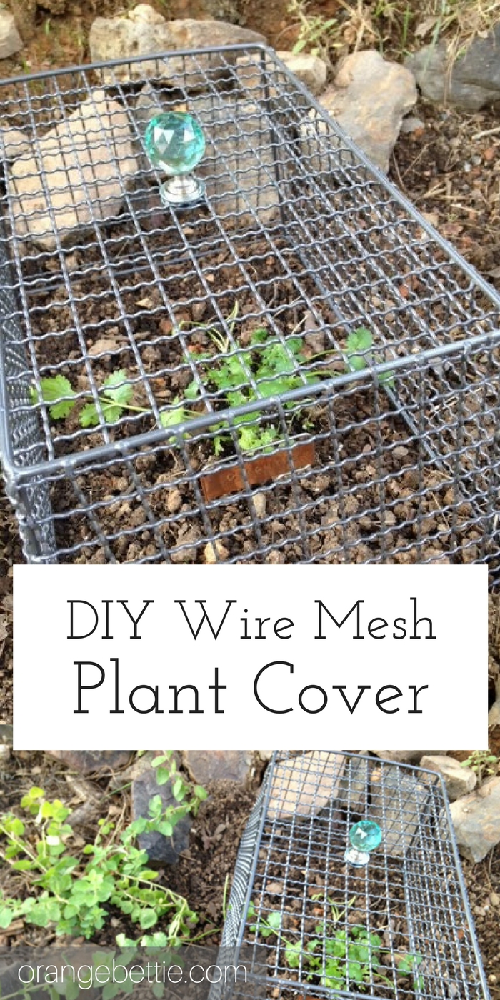 DIY Wire Mesh Plant Cover to Keep the Bunnies Out